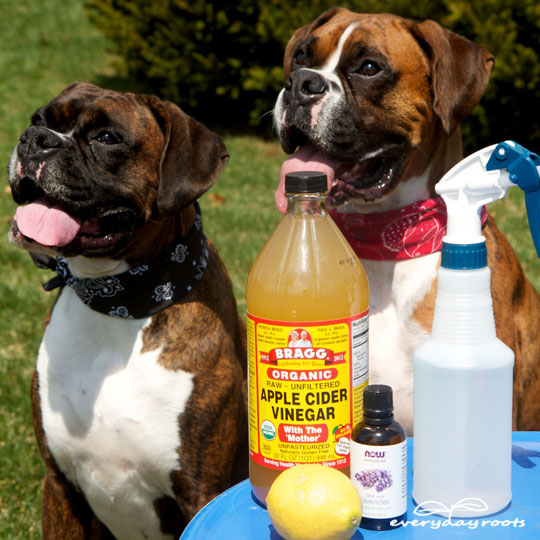 6 ways to naturally prevent and get rid of fleas on dogs solutioingenieria Image collections