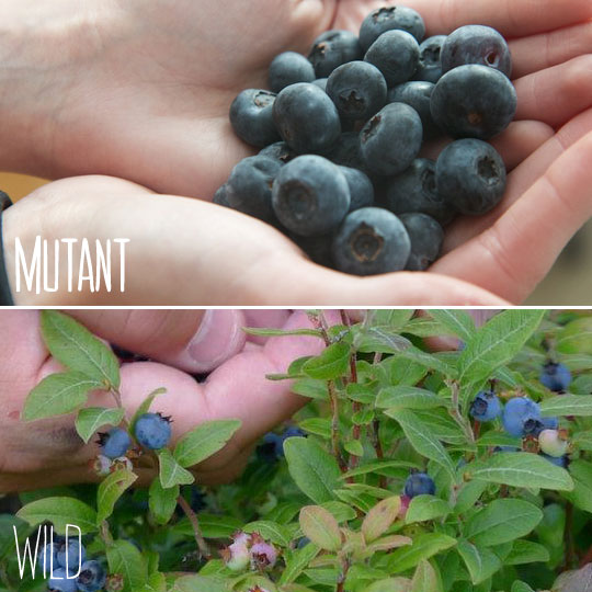 Mutant Fruit- why are we still eating it?