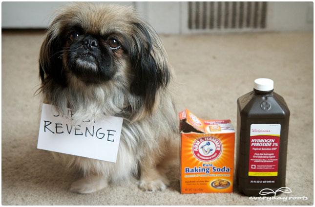 pee stain revenge