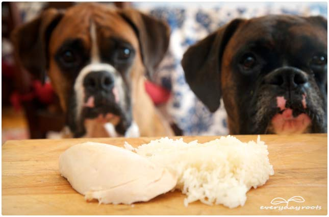 chicken and rice for dogs