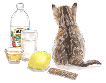 How to treat fleas on indoor cats