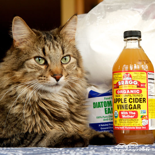 5 Natural Ways to Get Rid of Fleas on Cats- a great list of natural