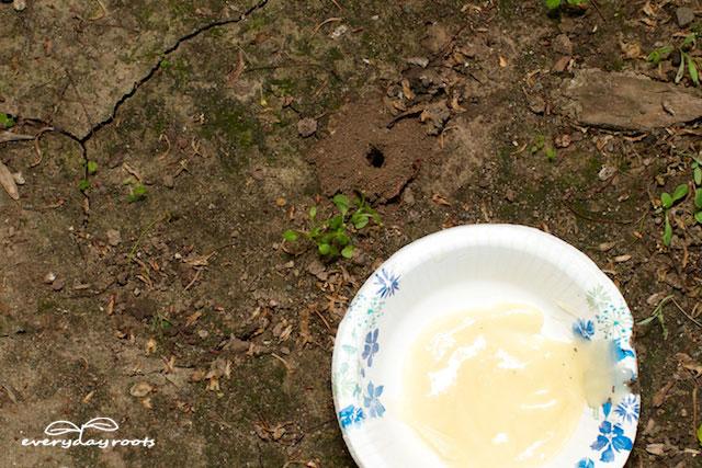 Ant Honey Pot