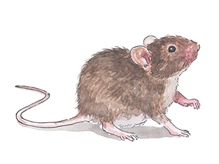 8 Poison-Free Ways to Get Rid of Mice | Everyday Roots
